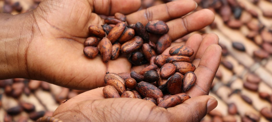 penurie cacao
